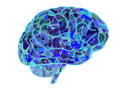brain,青