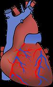 静脈瘤の種類