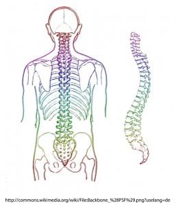 首の骨・腋窩神経・寝違い