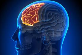 前頭葉を鍛える方法を紹介!ゲームや音読が効果的?