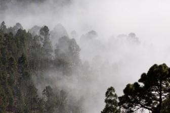 fog-571786_960_720