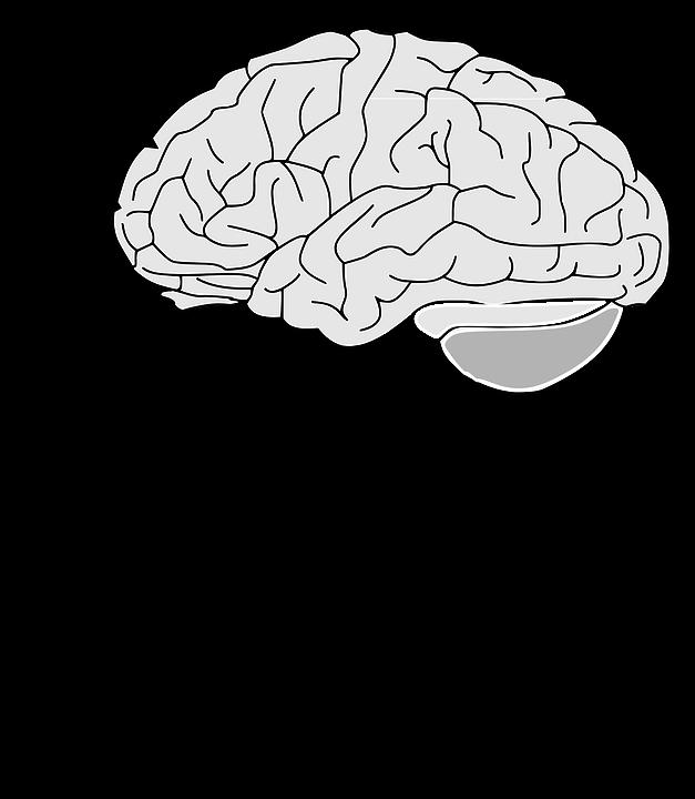 brain-153550_960_720