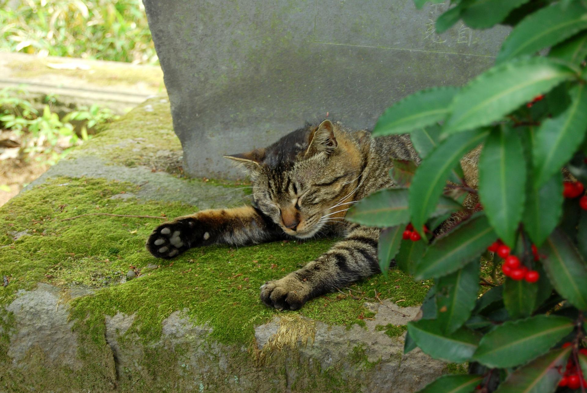 cat-546450_1920