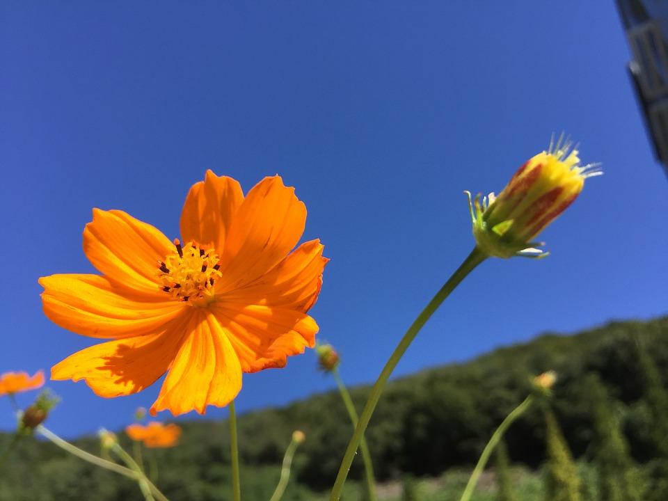 flowers-968146_960_720
