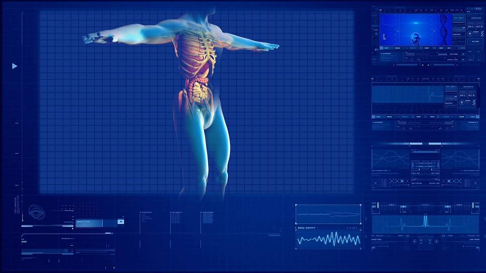 human-digestive-system-163714_960_720