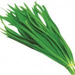 ニラの栄養と効能について!含まれる成分を知っておこう!