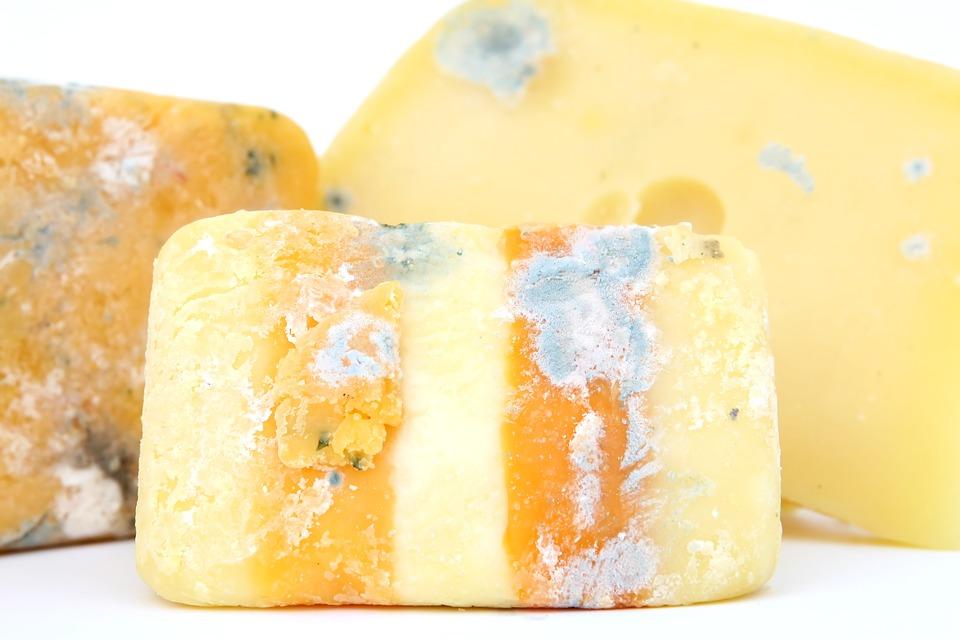 チーズカビ