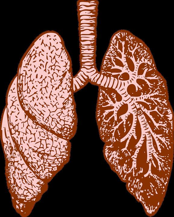 肺(きたない)