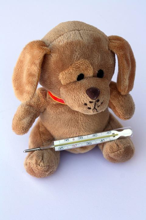 体温計クマさん