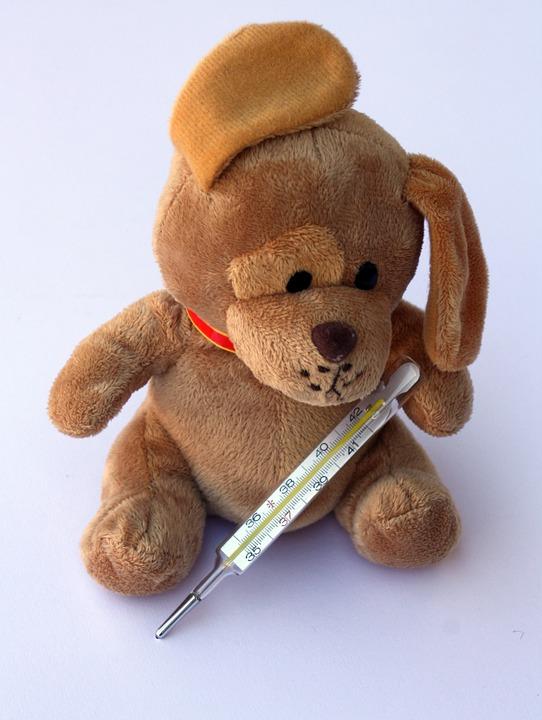 teddy-242868_960_720