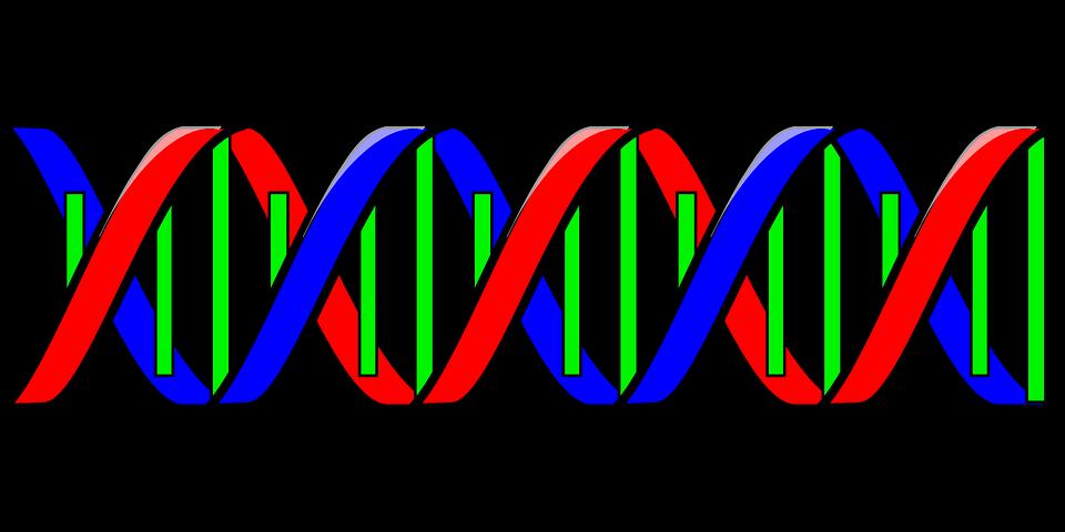 遺伝コード0