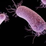 緑膿菌の症状とは?治療法や原因、予防方法を紹介!