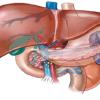 胆管炎とは?症状・原因・治療方法を知っておこう!