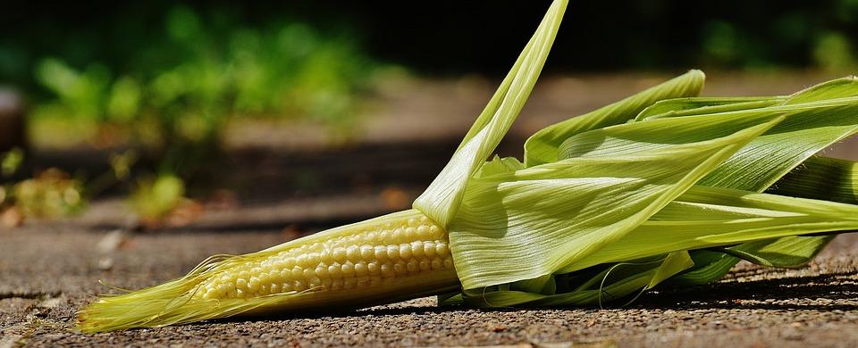 corn-1547887_960_720