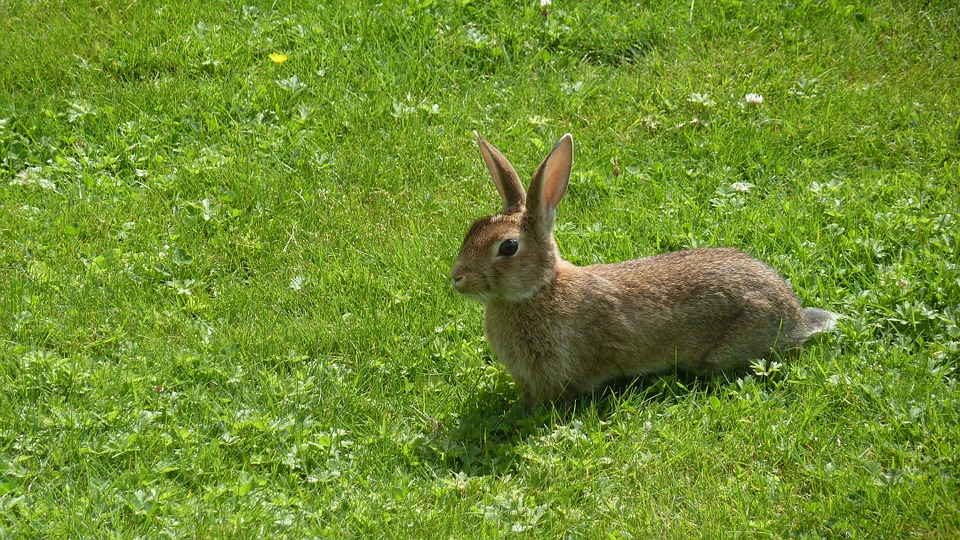 hare-191365_960_720