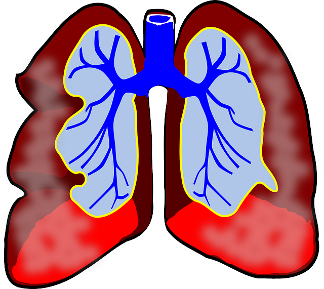 lungs-39981_640