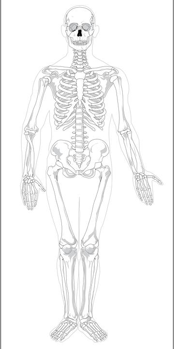 skeleton-41550_960_720