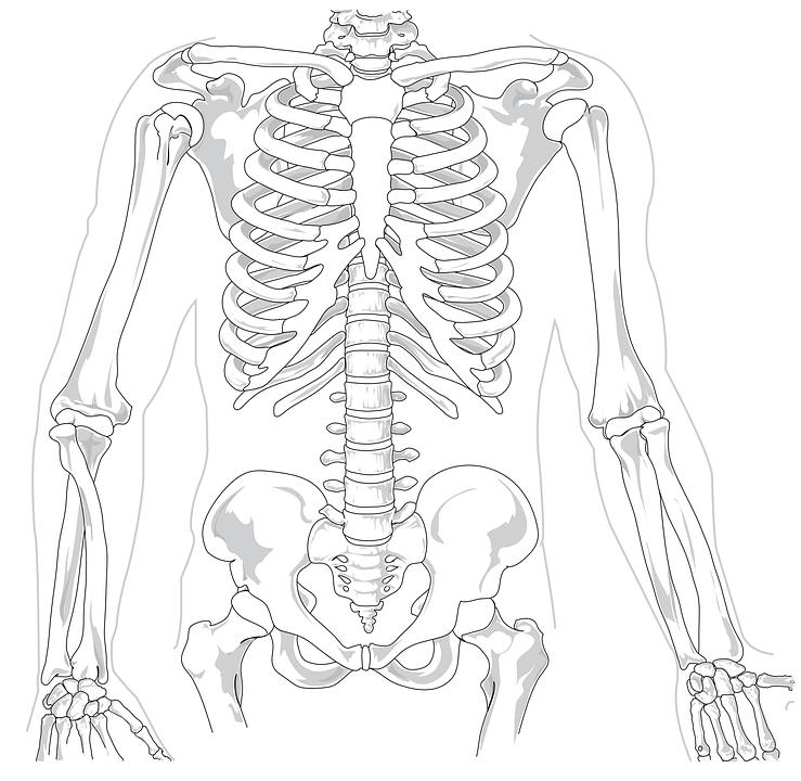 skeleton-41569_960_720