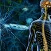 多発性硬化症の症状とは?治療法や病気の予後を紹介!原因は何?