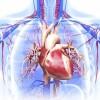 拡張型心筋症ってどんな病気なの?症状や原因、治療法を知ろう!日常での注意点は?