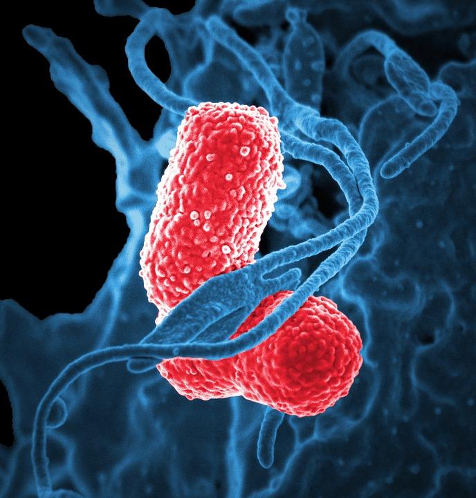 bacteria-811861_960_720