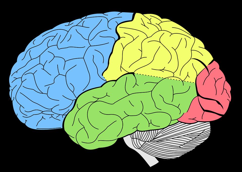 brain-1007686_960_720