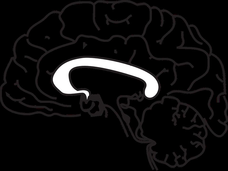 brain-148165_960_720