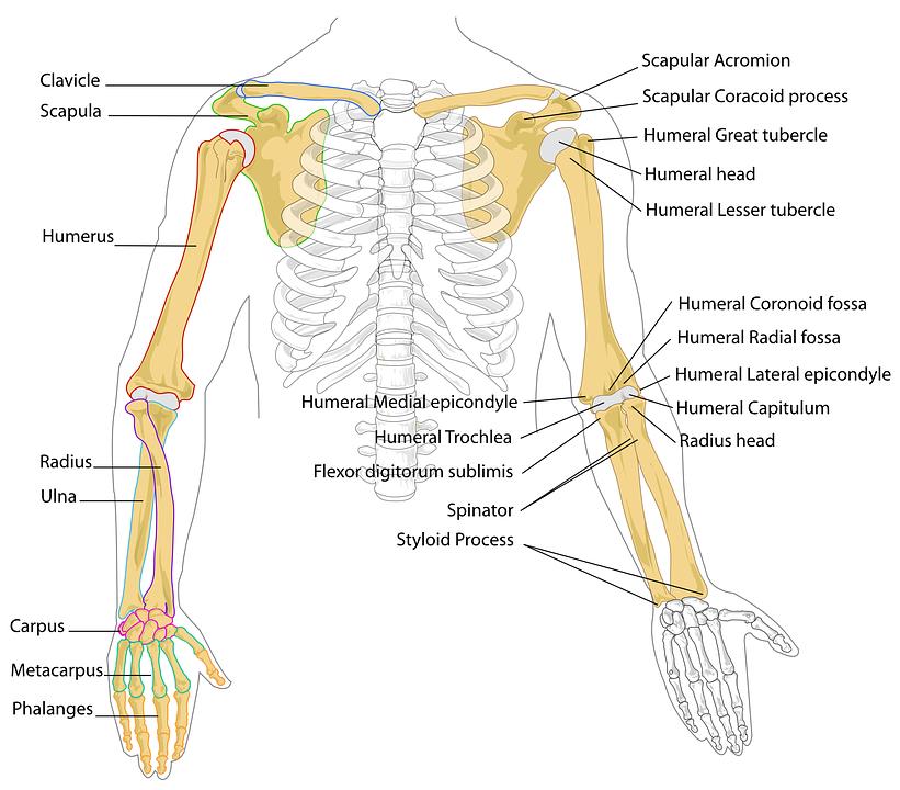diagram-41545_960_720