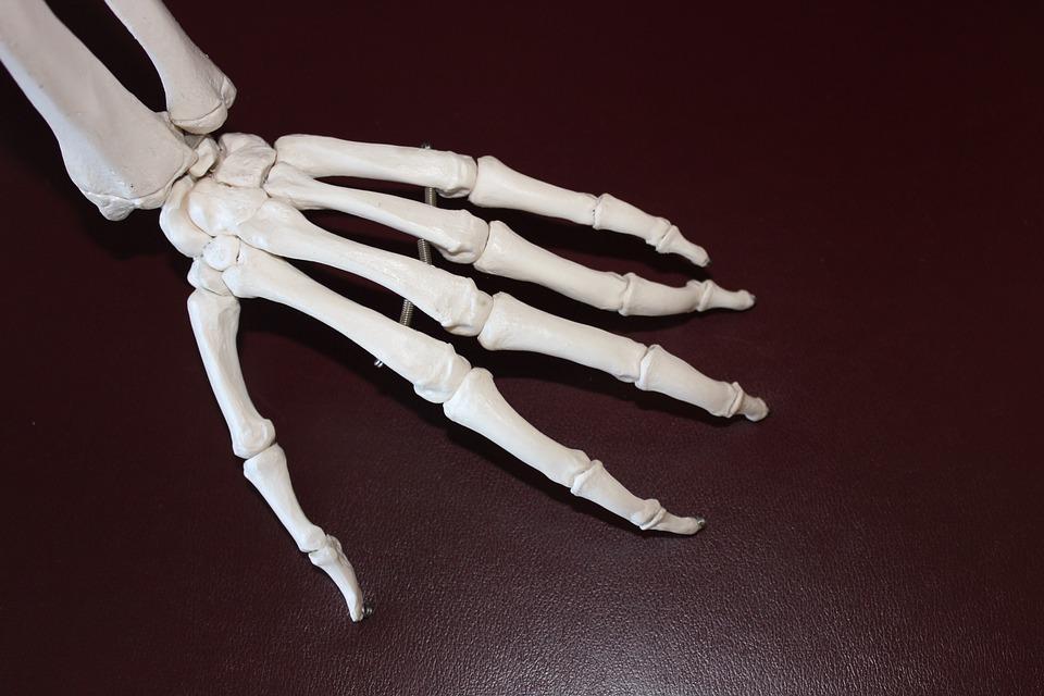 skeleton-778069_960_720
