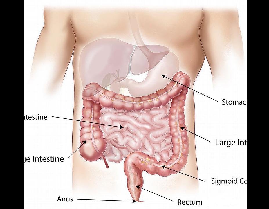 abdomen-1698565_960_720