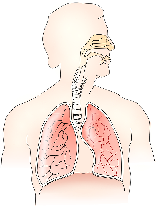 anatomy-145696_960_720