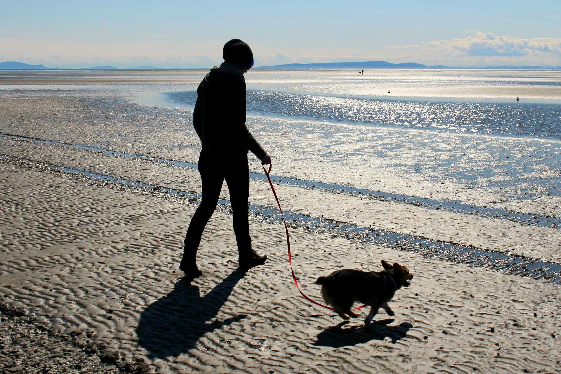 犬と散歩リラックス