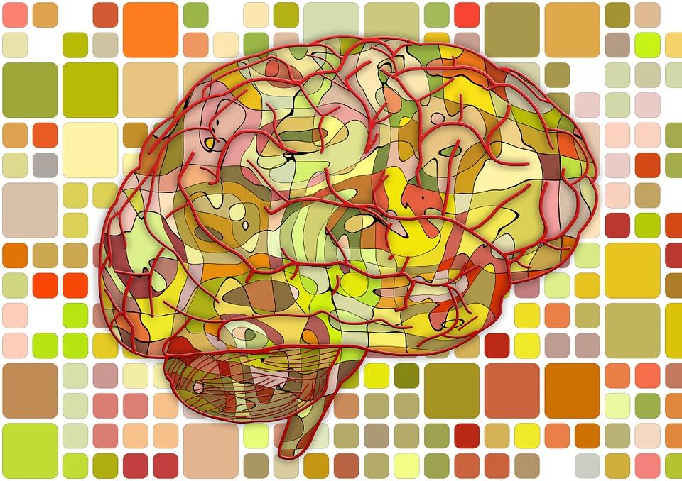 brain-951871_960_720%e8%84%b3