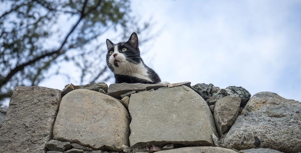 cat-1041665_960_720