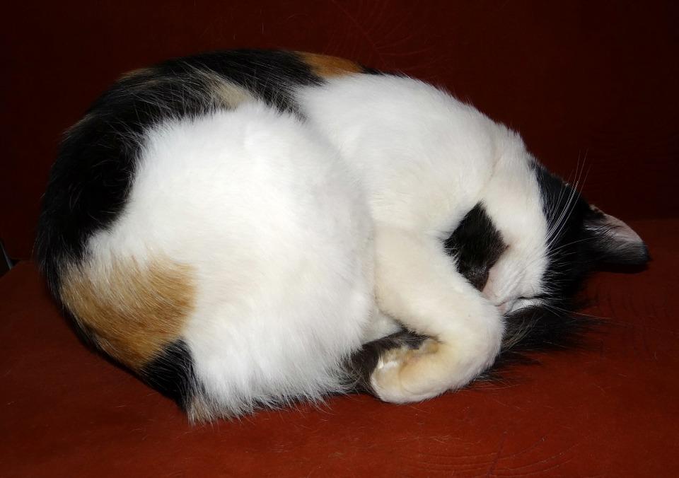 cat-173637_960_720%e4%bc%91%e7%9c%a0%e4%b8%ad