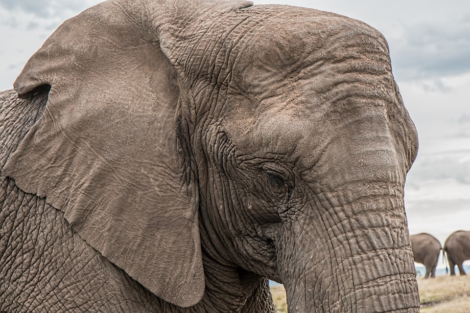 elephant-1526709_960_720