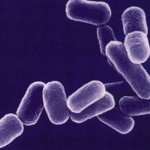ESBL(基質特異性拡張型βラクタマーゼ)感染症の対策について!症状や原因、治療法も紹介!