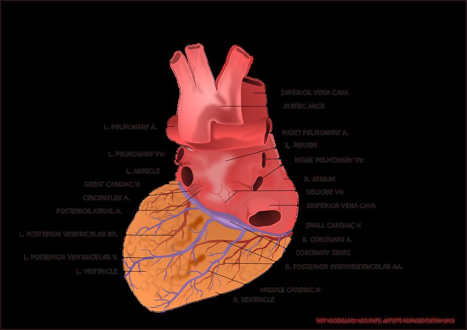 heart-147389_960_720