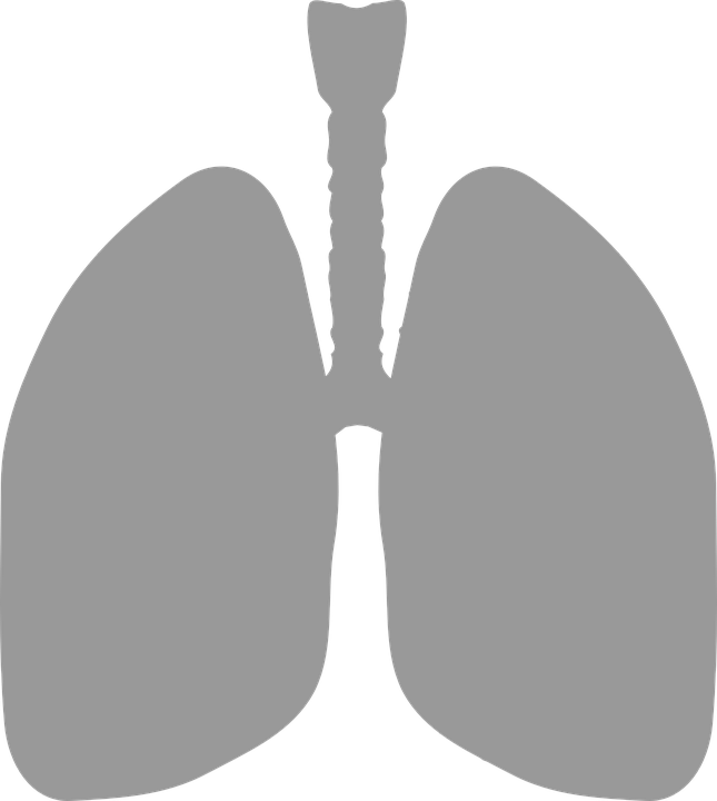 lungs-306032_960_720