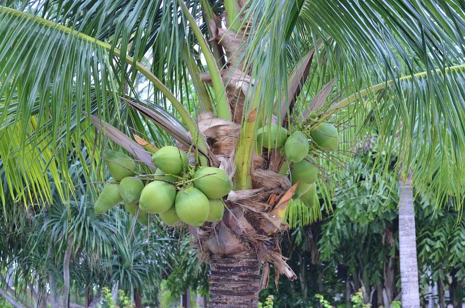 palm-1059898_960_720