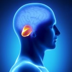 小脳失調症の症状とは?その種類や原因を知ろう!他の脳疾患との違いはなに?
