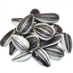 ひまわりの種の栄養について!効果的な食べ方や食べ過ぎのリスクを紹介!
