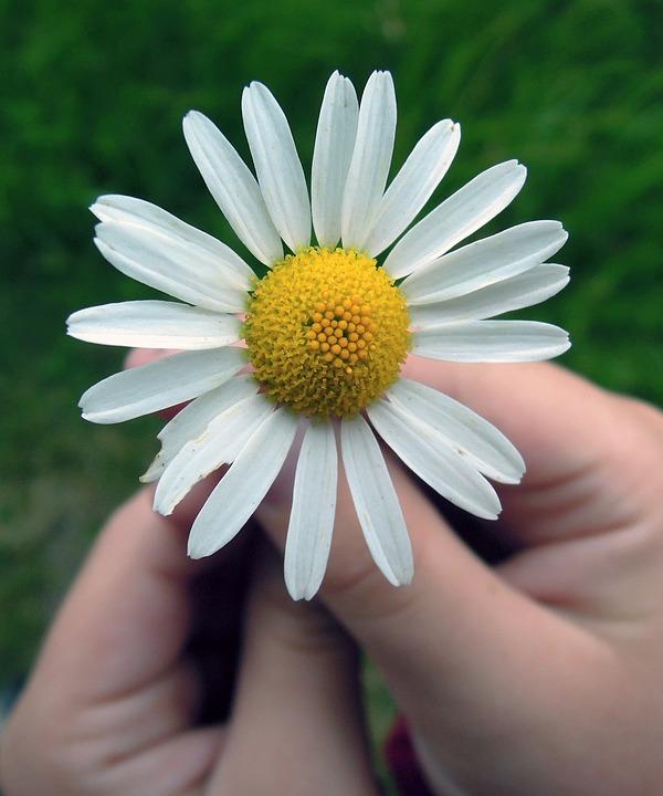 daisy-847045_960_720