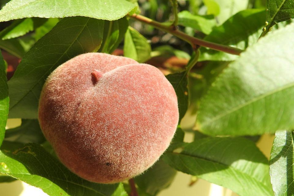 peach-1586954_960_720