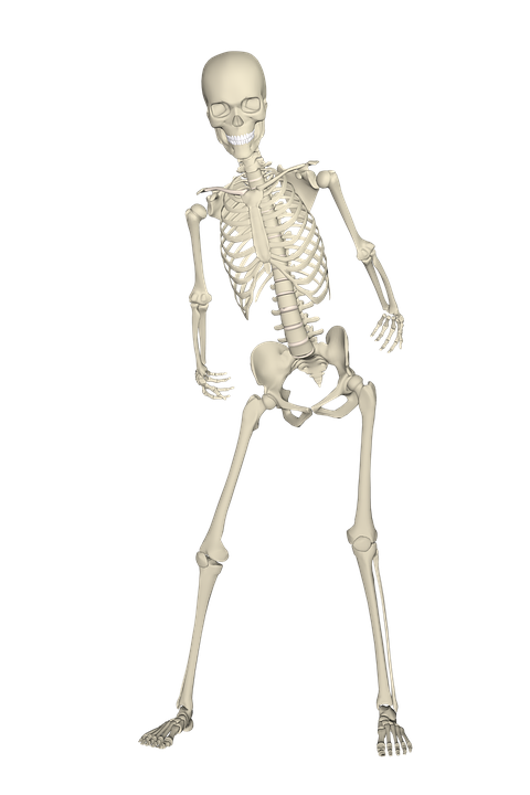 skeleton-1654869_960_720
