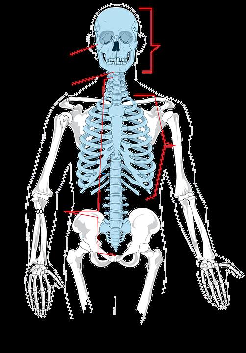 skeleton-294251_960_720