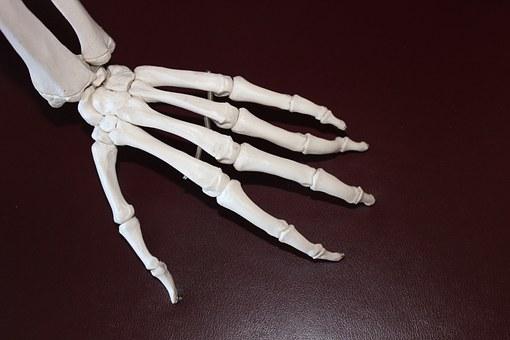 skeleton-778069__340