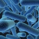 枯草菌ってなに?その特徴や効果、腸との関係性について知っておこう!