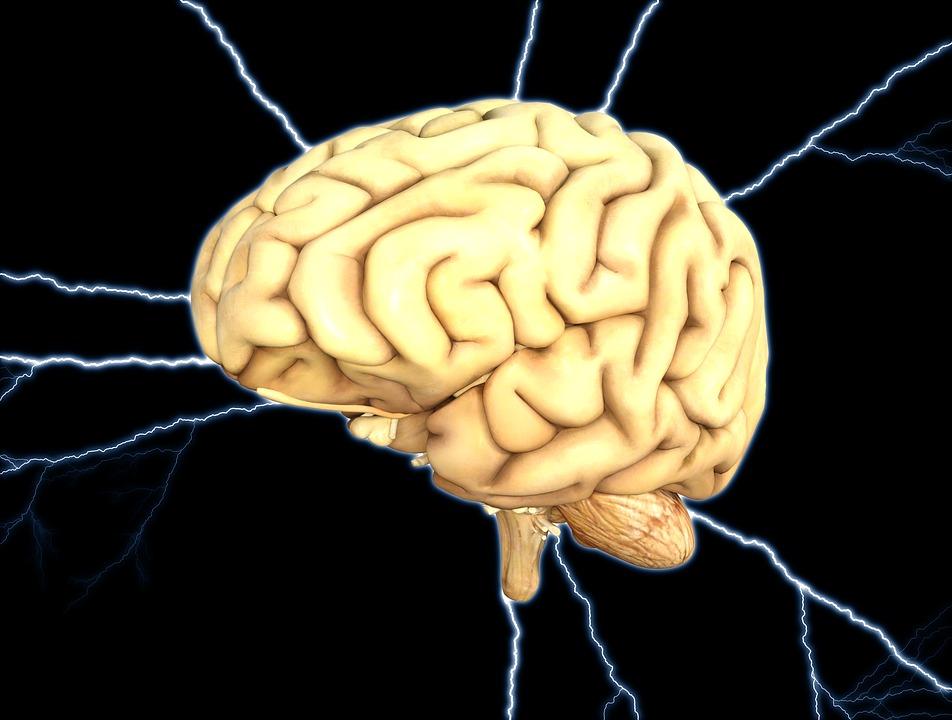 brain-1845940_960_720