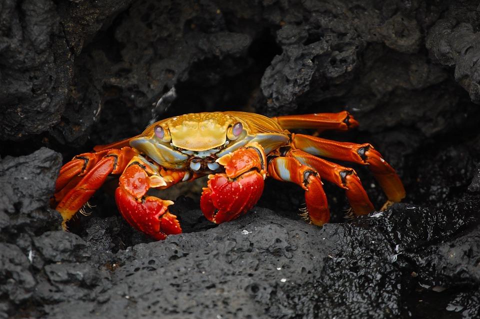 crab-63084_960_720